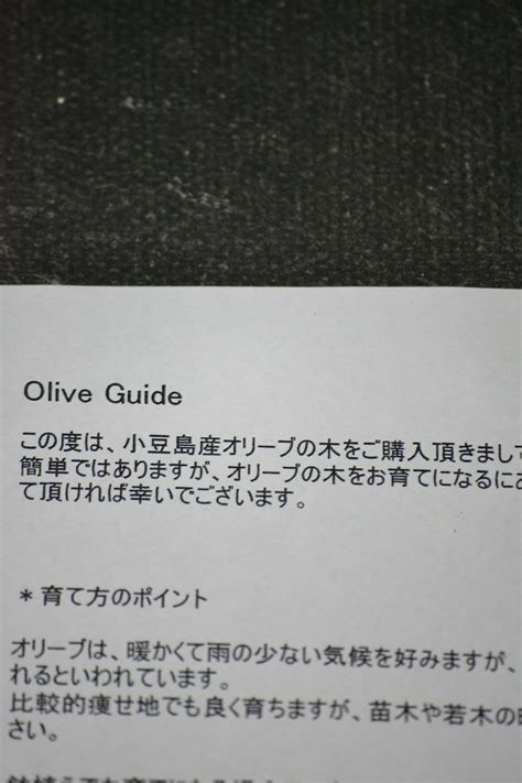Olive Garden Mall 205 by