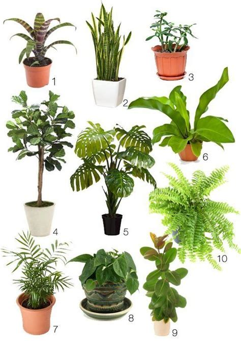 difficult plants to grow pinterest the world s catalog of ideas