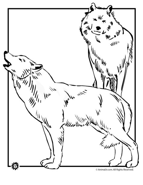 coloring books for wolves more advanced animal coloring pages for teenagers tweens boys zendoodle animals wolves practice for stress relief relaxation books coloring pages of wolves az coloring pages
