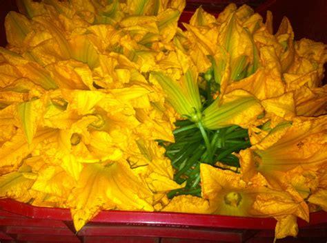fiori zucchina fiori di zucca e fiori di zucchina milanofresh