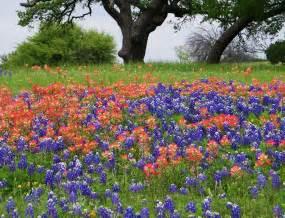 Flowers Tx Newschannel 10 Viewer Weather Pics Bluebonnet Indian