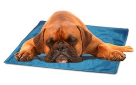 mats on dogs 5 ways to help your pup stay totally chill this summer