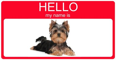 yorkie names pics for gt boy terrier puppies