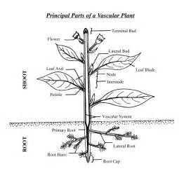 Az master gardener manual plant parts and functions