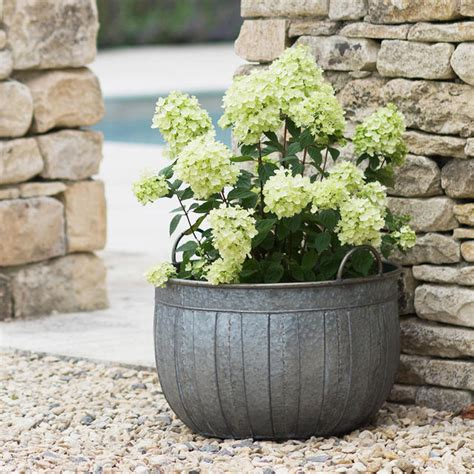 galvanised wash tub planters the worm that turned