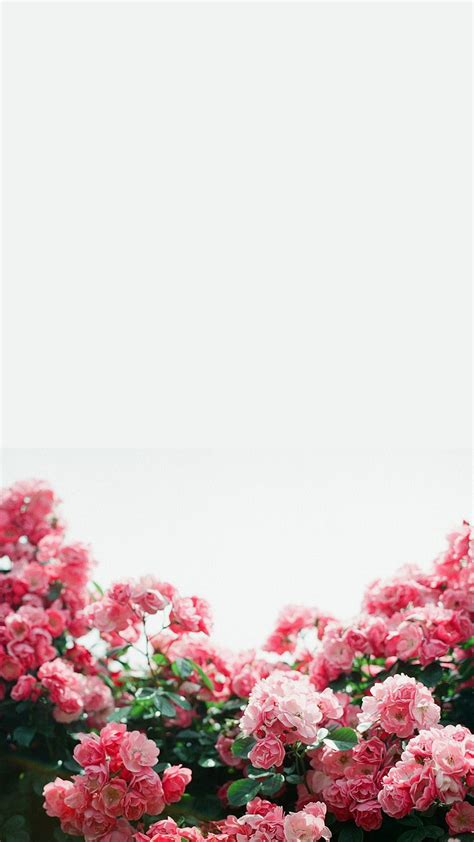 white pink floral flowers border frame iphone phone
