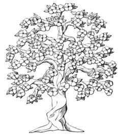 Baum Pflanzen Kaufen 414 by Gezeichnete Baum Symbol Isoliert Vektor Illustration