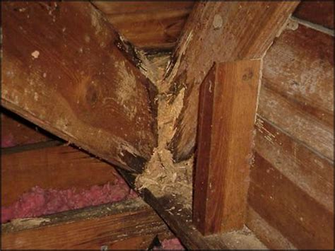 Termites Drywall Paper by Termite Wall Damage Detect Signs Of Termites In Walls