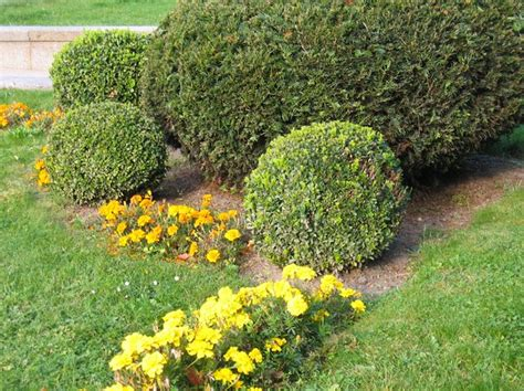 Garden Decorative Bushes by Free Stock Photos Rgbstock Free Stock Images