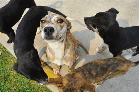 Tas La 1136 1gr 2 izcalli en pro cuidado y buen trato de tus mascotas el preg 243 n mx