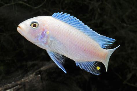 Blouse Atasan Tunik Import Blue Fish Bar Size L 219870 5 d weekly newsletter 09 12 16 09 16 16 5d tropical