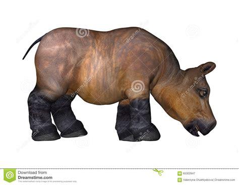 Hippo White hippo on white stock illustration image 65302847