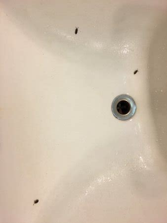 bugs in bathroom sink nearby goat rock beach foto di the jenner inn jenner