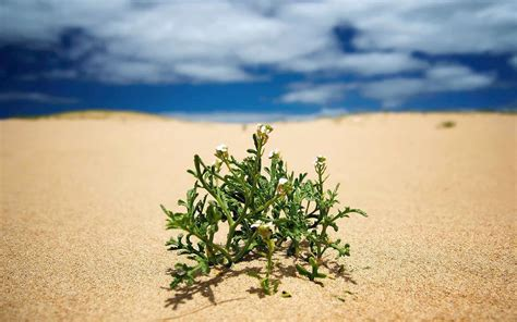 Plants And The Environment resurrection plants surviving in lifeless environments