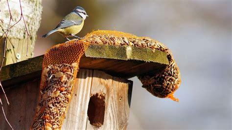 Nourrir Oiseaux Jardin by Comment Bien Nourrir Les Oiseaux Au Jardin