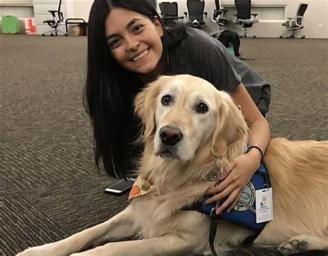canine comfort toledo comfort dog sent to las vegas to help calm shooting