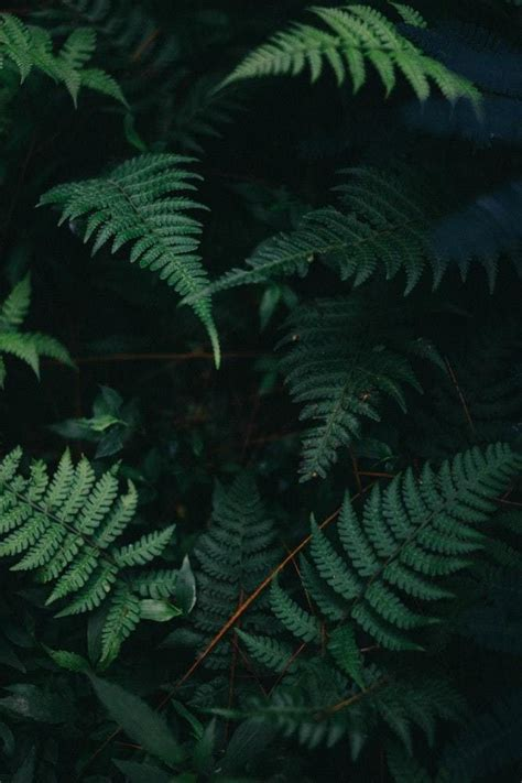 plants aesthetic fern plants   greenery
