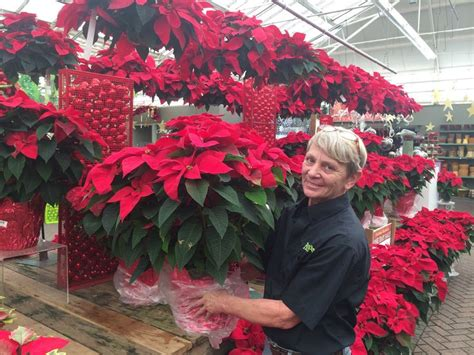 hicks nursery christmas decorations 11 best images about 2014 at hicks nurseris on trees fresh cut