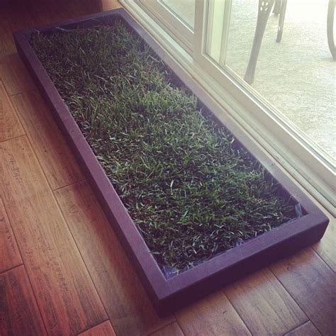 indoor grass for dogs indoor grass and the city los angeles orange county