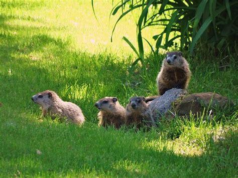groundhog day trope groundhog day posts