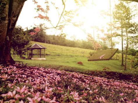 swing wallpaper springtime swing hd wallpaper 10590