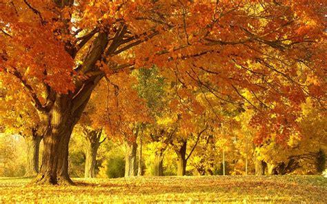 wallpaper free autumn wallpapers autumn scenery desktop wallpapers