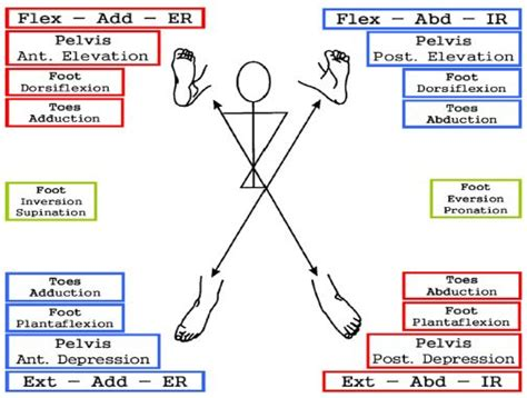 pnf pattern video pnf patterns pelvis and leg diagonals physio therapy