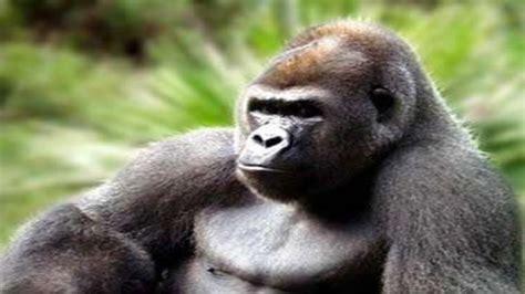imagenes de animales salvajes animales salvajes