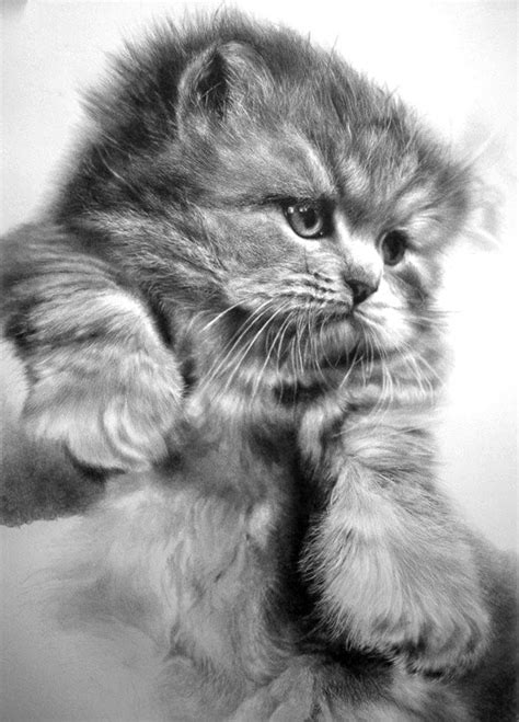 cat and drawing 30 beautiful cat drawings best color pencil drawings and paintings world of arts