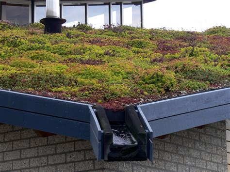 green roof boston green blog guest post the benefits of living