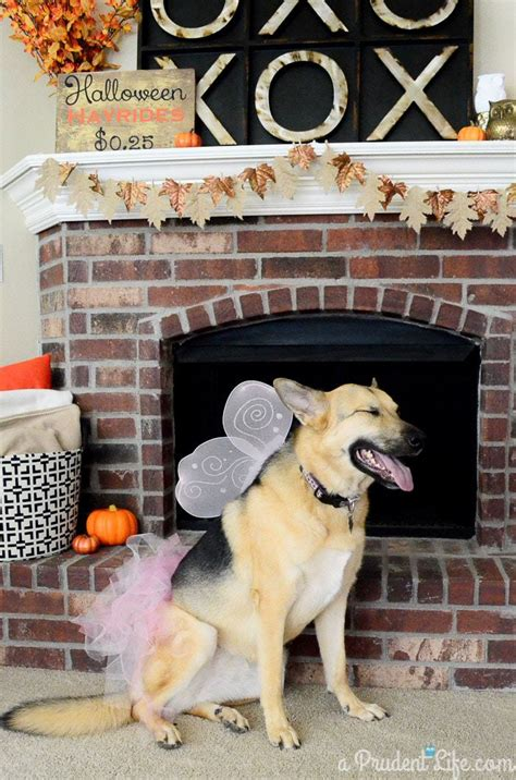 halloween themes with dogs fairy princess costume for your dog 80 more costume