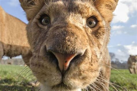 Animal Planet World S Most Dangerous Animals up and personal with some of the world s most