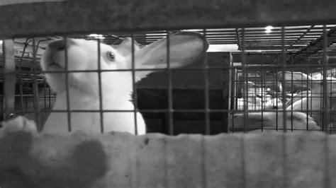 allevare conigli in gabbia appelli e petizioni luigiboschi it