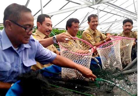 Jual Rangka Kolam Terpal Jogja 6 pakan alternatif ikan lele agar cepat besar kolam terpal