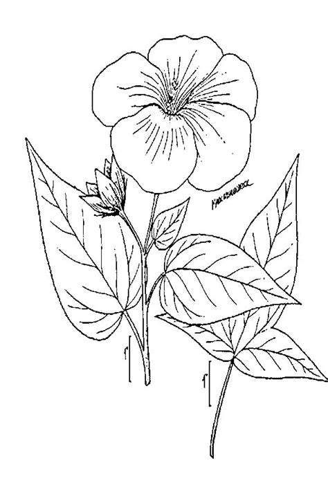 Large image for Hibiscus laevis (halberdleaf rosemallow