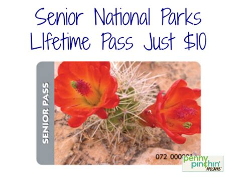 senior lifetime national parks pass for 10 can take 3 adults in for free with them