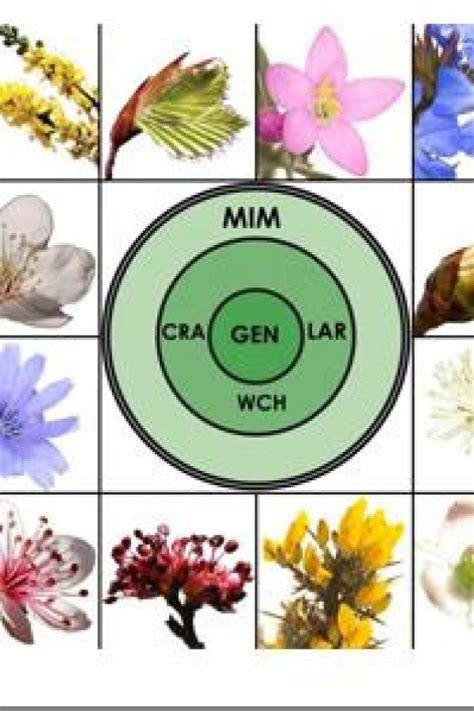 fiori di bach torino centro di benessere seminario 2018 con il dr orozco a