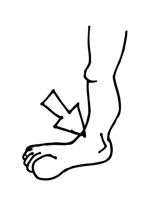 coloring page ankle img 11478