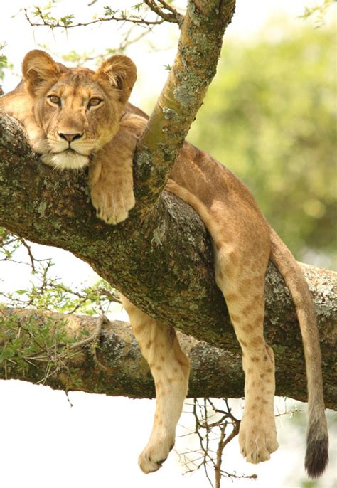 queen elizabeth national park uganda wildlife queen elizabeth national park wildlife location in uganda