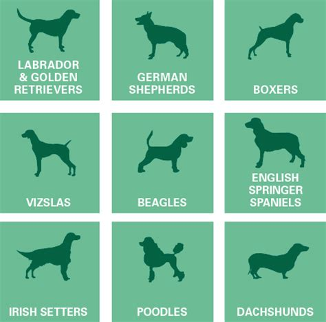 types of seizures in dogs understanding your s epilepsy pexion