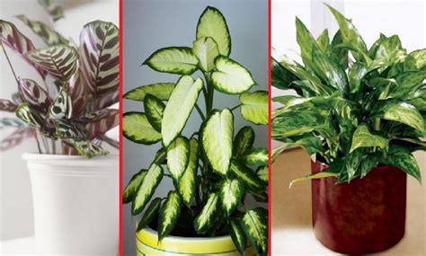 Plante Interieur Facile by 10 Plantes D Int 233 Rieur Faciles 192 Entretenir Et