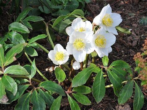 giardini in fiore giardini in fiore giardinaggio giardini fioriti