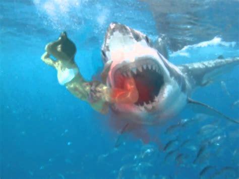 Submarine Shark Attacks Woman   great white shark attack youtube