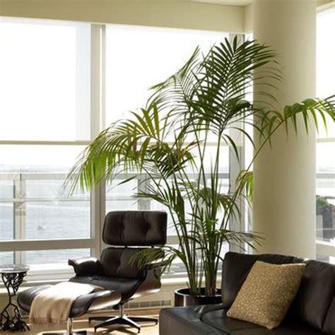 living room trees 10 greseli pe care sa nu le faci in decorarea locuintei viviana design