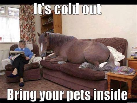 Barker Beds Cold Outside Funny Pictures Quotes Memes Jokes