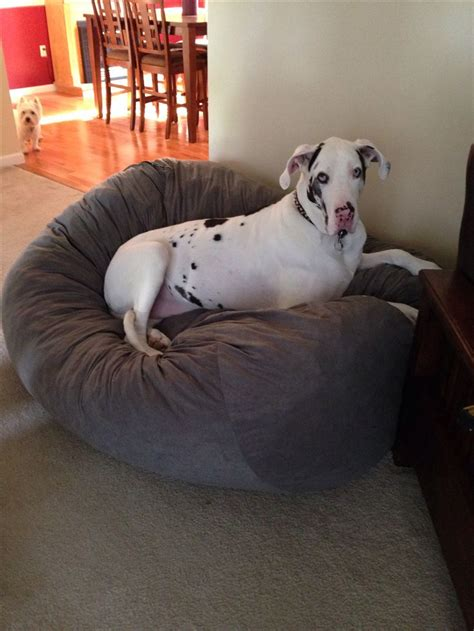 great dane beds the 25 best great dane bed ideas on pinterest