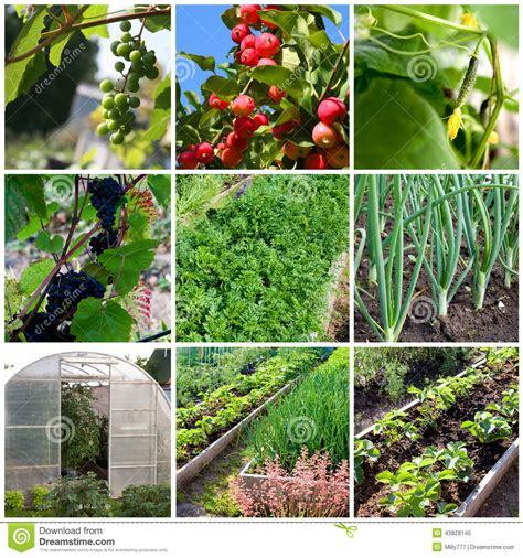 fruit and vegetable garden vegetables greenhouse and fruit garden in russia stock
