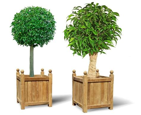 Wooden Versailles Planters by Pair Of Large Wooden Versailles Planters Large Wooden