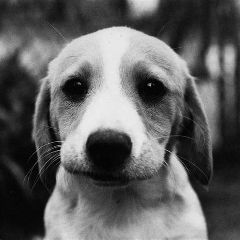 sad puppy love this is the perfect quot please take me home quot face it would