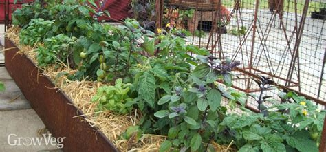 How To Harvest Rainwater In Your Vegetable Garden When To Water Vegetable Garden